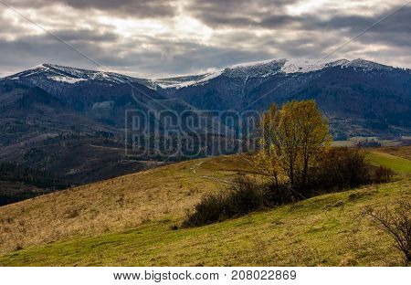 Tree With Yellow Foliage In Mountains