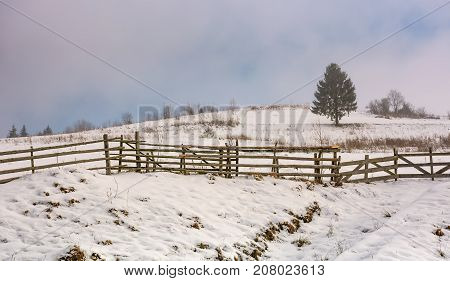 Coniferous Tree On Snowy Meadow In Fog
