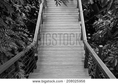 Wooden sky walk or walkway cross over treetop at outdoor garden. (Black and White filter effect)