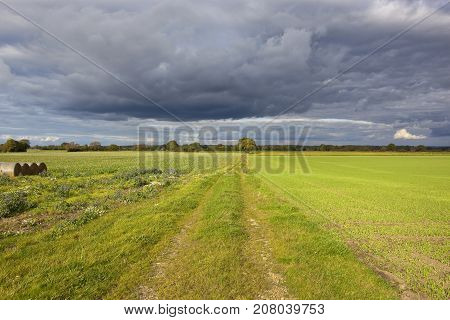 Autumn Woodland And Farm Track
