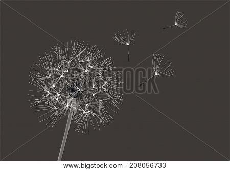 vector illustration of a dandelion flower on dark background
