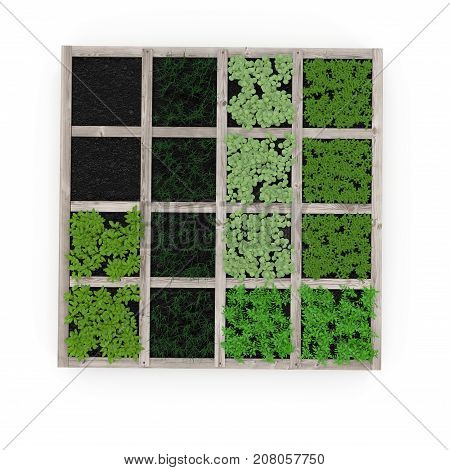 Wooden box with a young garden on white background. Top view. 3D illustration