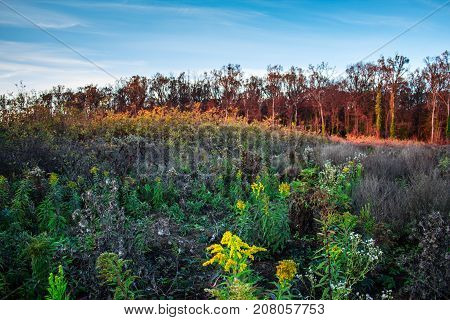 Beautiful colorful autumn meadow and forest full of flowers underbrush weeds and plants on a dusk as a fall season background