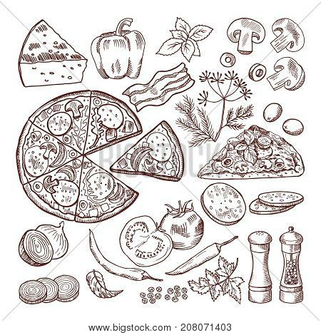 Italian pizza with different ingredients. Vector doodle set pizza and cheese, tomato vegetable and ingredient illustration