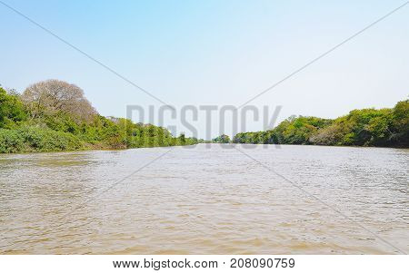 Pantanal Landscape With The River And Green Vegetation On The River Banks