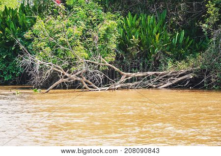 Fallen tree on the banks of the river. Green vegetation on background and the waters of the river. Photo taken in Pantanal Brazil.