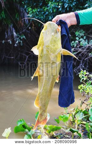 Hands Of A Fisherman Holding A Fish Known As Jau