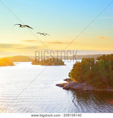 Scandinavian landscape with small islands at sundown and flying sea gulls