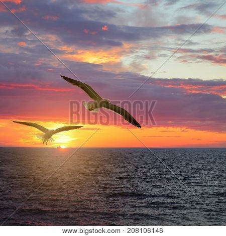 Scenic sunset seascape with sea gulls