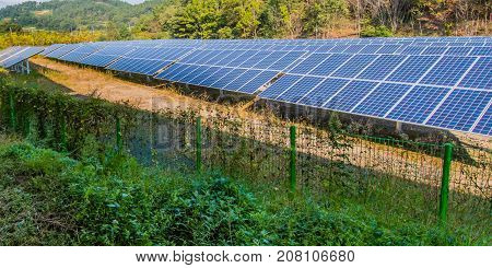 Large solar panel array in a woodland park in South Korea.