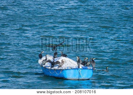 group of the Great Cormorant birds on a boat in Draycote Waters lake, UK.
