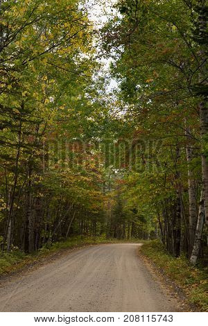 A gravel road through a forest with deciduous trees. Some leaves are changing to gold and rust. Photographed in natural light.