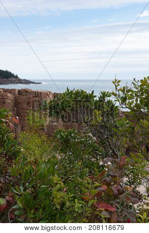 A rocky outcrop jutting into the Atlantic Ocean. Vegetation is in the foreground. Photographed in natural light in Acadia National Park Maine.