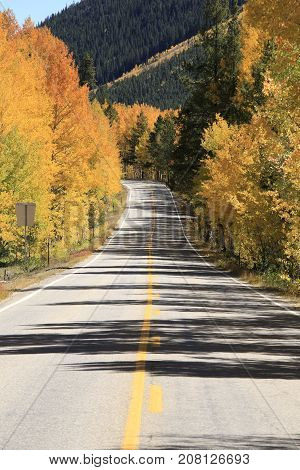 Autumn: Golden trees along the US route 82 in Rocky Mountain
