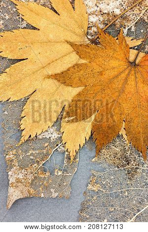 Withered Yellow Fallen Leaves And Leaves Skeletons On Grey Background