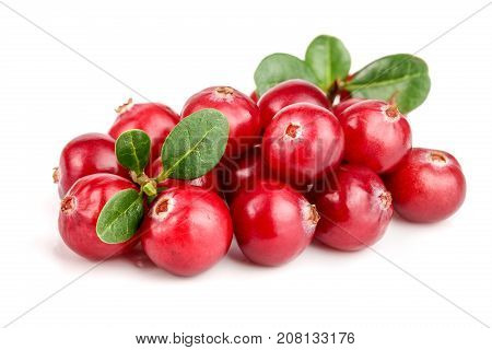 Cranberry with leaf isolated on white background closeup macro.