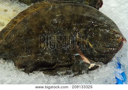 Whole Quality Turbot fish at fish market in Sydney New South Wales Australia