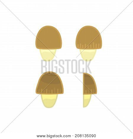 Flat colorful cartoon straw mushroom icon. Isolated vector shroom symbol for cookbook recipe childrens book or game illustration health protein food concept