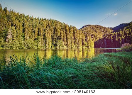 The lake in the forest. High-rise forest lake. Artistic picture. Discover the world of beauty. Scenic landscape. Beauty world. Eastern Europe. Romania. Lake Luka Roshu