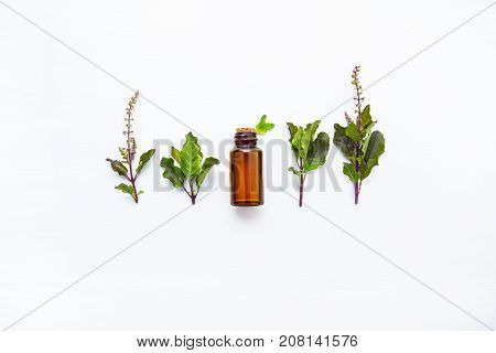 Holy Basil Essential with Holy Basil Leaves on white wooden background.