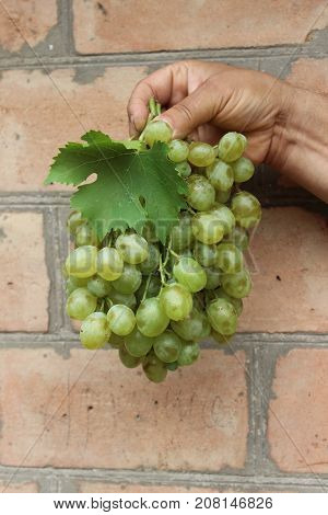Grapes in hand on brick wall background