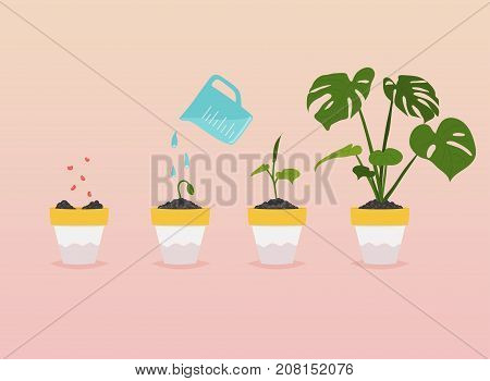 Plant growing stages. Timeline Infographic of planting tree. Flat design style modern vector illustration concept.