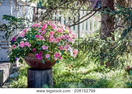 Flowerbed on flower garden as landscape design element.