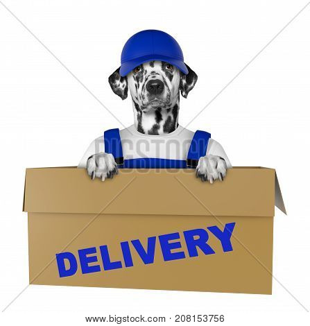 Mail dalmatian dog in a very big moving box. Isolated on white background