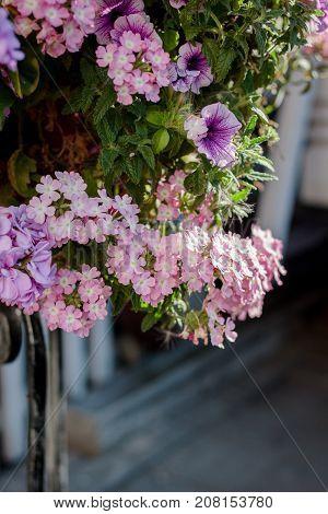 Flowers at flowerbed as landscape design elements