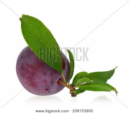 Fresh plum with leaves isolated on white background