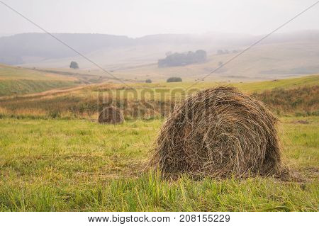 Round bale of hay on a sloping green field in cloudy weather against the background of other bales of twisted into cylinders