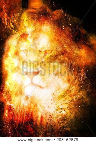 Lion in the cosmic space. Lion photos and graphic effect