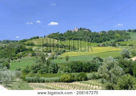 Country landscape in Romagna along the road from Cesena to Sogliano al Rubicone at summer. Vineyards