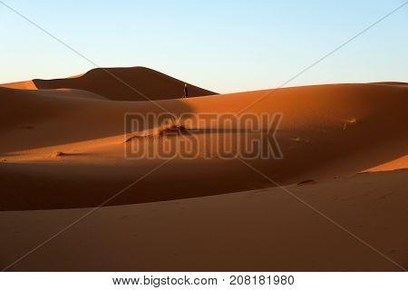 Alone Berber walking in dunes in Sahara desert Morocco