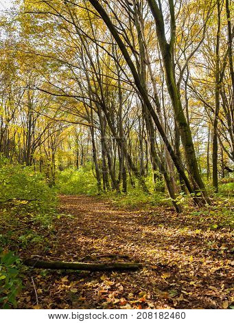 Path in a deciduous forest in autumn the sun shining through colord leaves