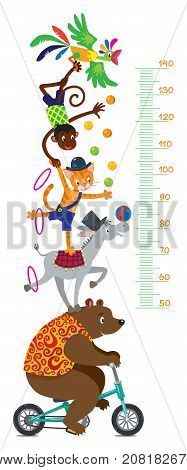 Funny circus animals. Bear on bicycle, donkey, cat, monkey and parrot. Height chart or meter wall sticker. Childrens vector illustration with scale from 50 to 140 centimeter.