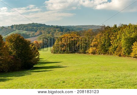 Meadow and deciduous forest in autumn with colored leaves (Wienerwald Austria)