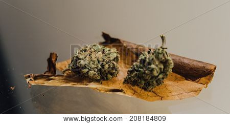 Weed Blunt Close-up..two Buds Of Marijuana Lying On A Cigarette Sheet