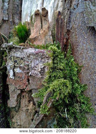 Moss Growing on Gnarled Tree Trunk Bark