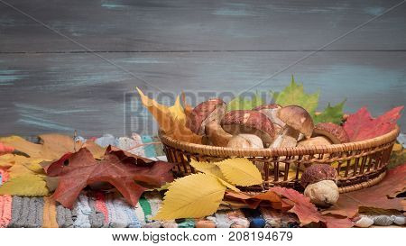 Mushrooms in the basket acorns and maple leaves over wooden background. Hand-made cotton mat. Autumn cep mushrooms.