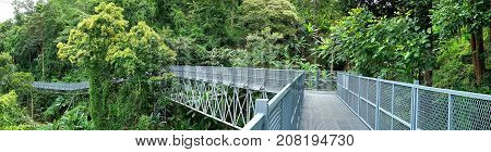 Panorama view of Tree Canopy Walkway The Iron Bridge in the tropical forest at Queen Sirikit Botanic Garden Chiang Mai Thailand