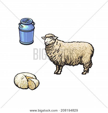 vector sketch cartoon style sheep, stainless steel milk-can container and cheese. Isolated illustration on a white background. Hand drawn animal without horns, fermented milk products.