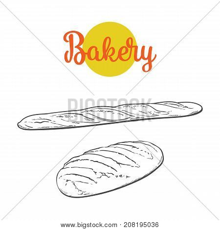 vector sketch fresh white loaf bread, french baguette set . Detailed hand drawn isolated illustration on a white background. Flour pastry products, bakery banner, poster design object