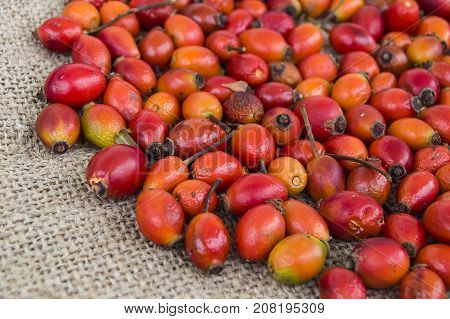 pictures of rosehip fruit dried in a tray, drying rosehip, drying rosehip to drink rosehip tea.