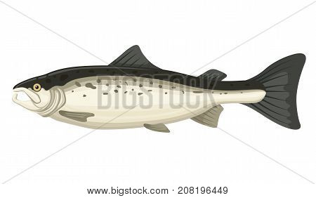 Salmon food fish. Large nutritious, fat and high in omega meat, marine and freshwater. Vector flat style cartoon illustration isolated on white background