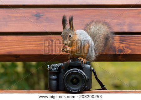 Squirrel sits on the camera with nuts autumn