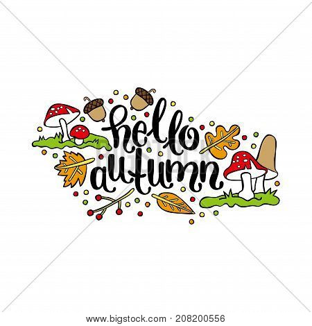 Hello, Autumn. Mushrooms, autumn leaves, acorns, berries. Isolated vector object on white background.