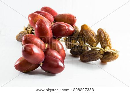A bunch of fresh red date fruits and A bunch of dried red date palm