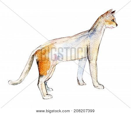 The white cat with a red spot watercolor illustration isolated on white background.