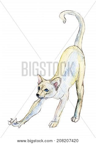 The white cat stretches watercolor illustration isolated on white background.